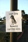 Bureaucrats overly complicate family's efforts to find its missing dog.