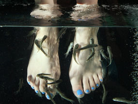 State and animal rights group seek ban on fish pedicures for Fish pedicure nyc